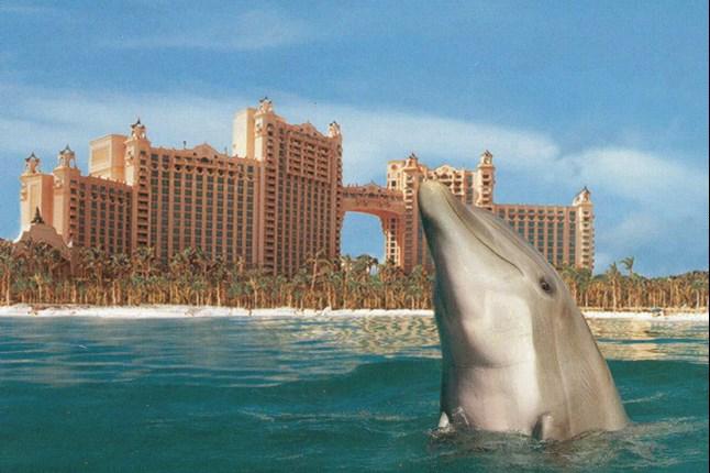 Отель Atlantis в программе Аквариумный бизнес